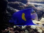 Cretaquarium (Meeresaquarium) - Insel Kreta foto 11