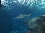Cretaquarium (Meeresaquarium) - Insel Kreta foto 4
