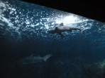 Cretaquarium (Meeresaquarium) - Insel Kreta foto 5