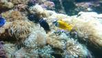 Cretaquarium (Meeresaquarium) - Insel Kreta foto 25