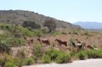Natur auf der Insel Rhodos foto 5