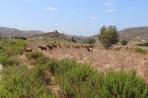 Natur auf der Insel Rhodos foto 8