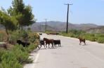 Natur auf der Insel Rhodos foto 9