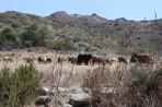 Natur auf der Insel Rhodos foto 10